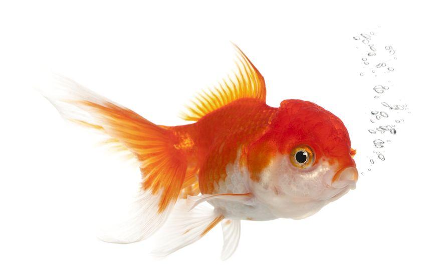 Image alt tags - fish blowing bubbles