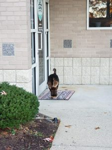 Turkey outside the offices of Alsamir Family Dentistry