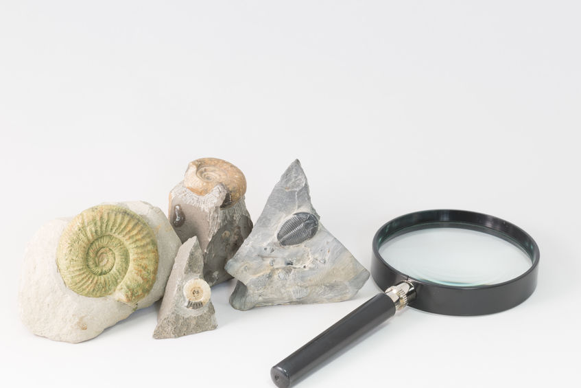 SEO Services - magnifying glass next to shells/fossils